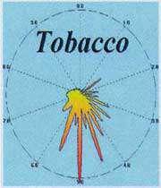 تنباکو
