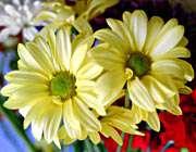 دو گل