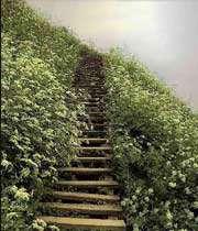 پله های کمال