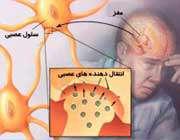 دستگاه عصبي انسان