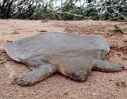 جانور حشره خوار الفانت