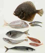 انواع ماهی