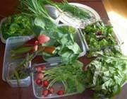 منابع غذایی اگزالات