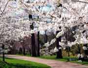 بہار کا موسم