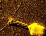 شکل 3. تصویر afm باکتریخوار 4t
