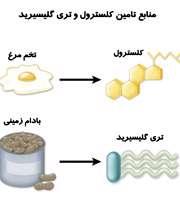 منابع تری گلسیرید و کلسترول