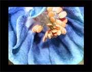 گل رنگ آبی