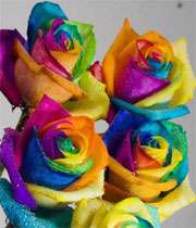 گل رز هفت رنگ