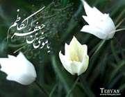 امام موسی کاظم علیہ السلام