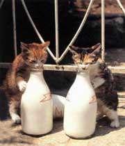 بلی کے بچے