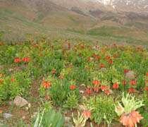 وادي الورد المقلوب