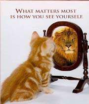 funny cat looking in the mirror