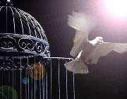 مرگ رهایی است