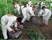 کشاورزی هسته ای