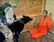 la torture publiquement légalisée et institutionnalisée par les usa
