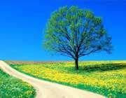 جنگل، جاده، درخت
