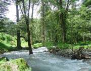 the forest which is called two thousand in mazandaran