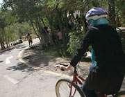دوچرخه سواری و ایمنی