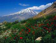 nature of damavand
