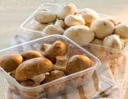 ShikPoshan.COm | خواص مفید قارچ ها