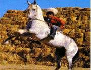 جواهري نشناخته به نام ترکمن صحرا