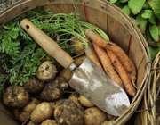 هویج و سیب زمینی