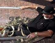 jackie bibby, the texas snake man