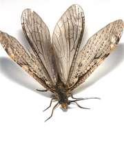 طبقه بندی حشرات