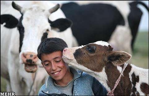 زندگی عشایر ایران( تصویری) انجمن سیاسی اجتماعی