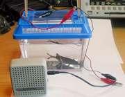 گوش کردن به ماهیالکتریکی