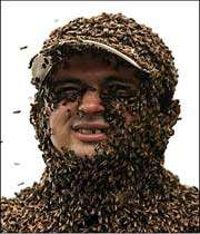 most bees on a human being