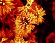 تصویر sem از نانوسیم zno