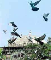 بابری مسجد