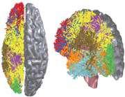 2019 سال رايانه هايي به قدرت مغز انسان