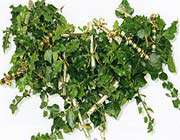 holly and ivy garland