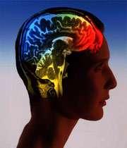 مغز چگونه فرهنگ لغات می سازد؟