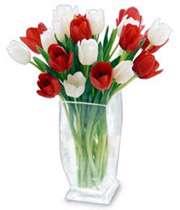 گل های سرخ و سفید