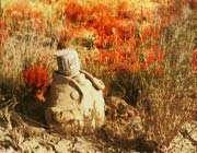 این  که میگن شهدا زنده هستند چه طوریه؟و وجه تمایز پیکر  شهدا با اجساد عراقی