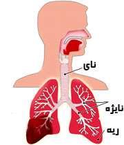 بیماری ریه copd