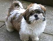 عکس, تصویر, دلیل نجس بودن سگ چرا سگ نجس است ؟