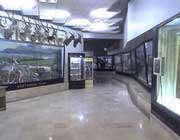 متحف الحيوانات المختلفة