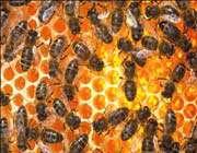 3d images peer inside beehives