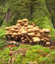 همه ی قارچ ها خوردنی نیستند