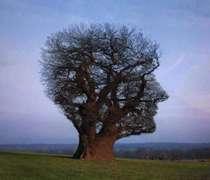 درخت، شخصیت،  درخت شخصیت