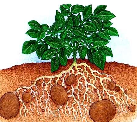 طبقه بندی گیاهان