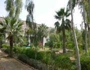 tis köyü