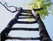 زندگی یک نردبان و خلق آویزان از آن(طنز)