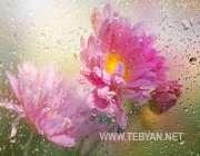 گل،طراوات، شادابی