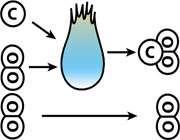 واکنش های گرماده و گرماگیر