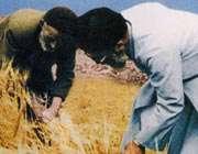 مقام معظم رهبری در حال کمک به کشاورزی که پدر سه شهید است